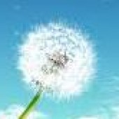 حرکتی برای «بهار ایام»